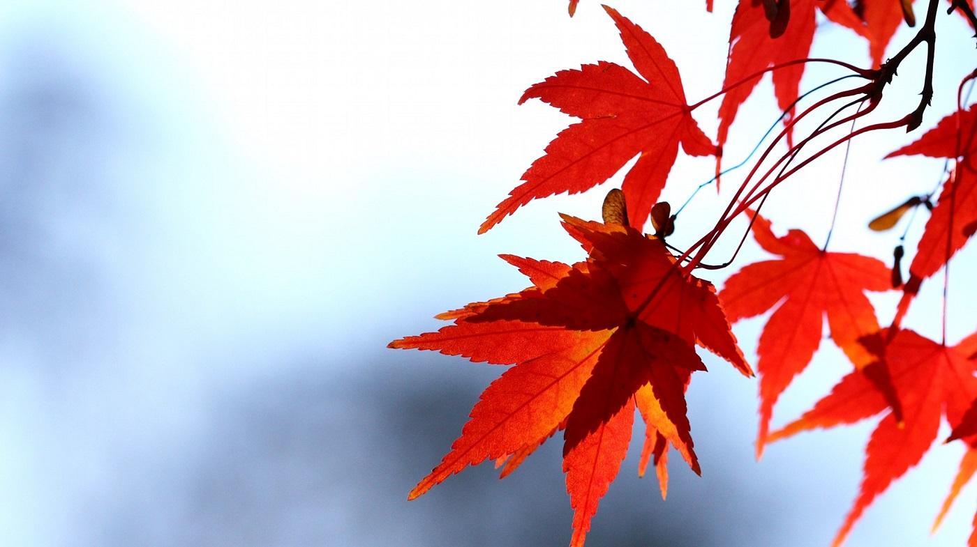 Podzimky na srubu